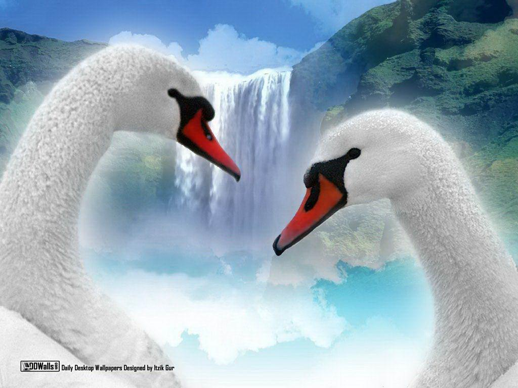 Free love wallpapers for desktop wallpaper cave - Swan wallpapers for desktop ...