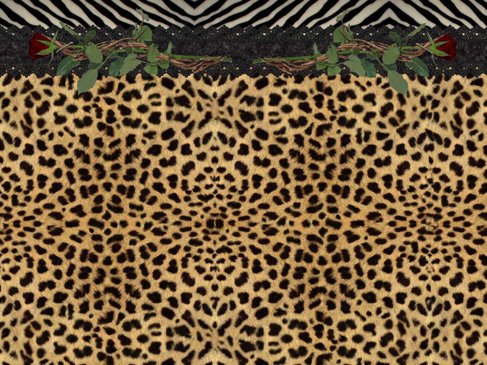 cheetah backgrounds image wallpaper cave