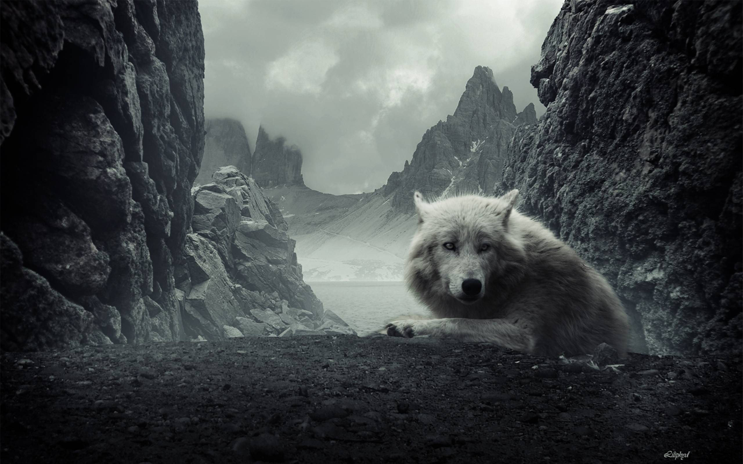 really cool wolf wallpapers - photo #26