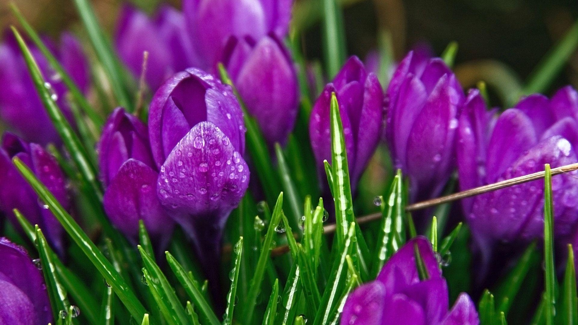 Purple Strange Flowers Wallpapers | HD Wallpapers