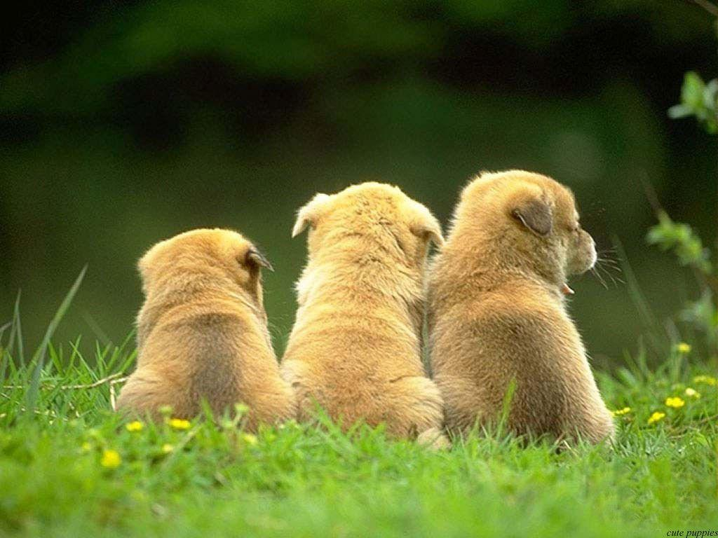 Cute Dogs and Puppies HD Wallpapers