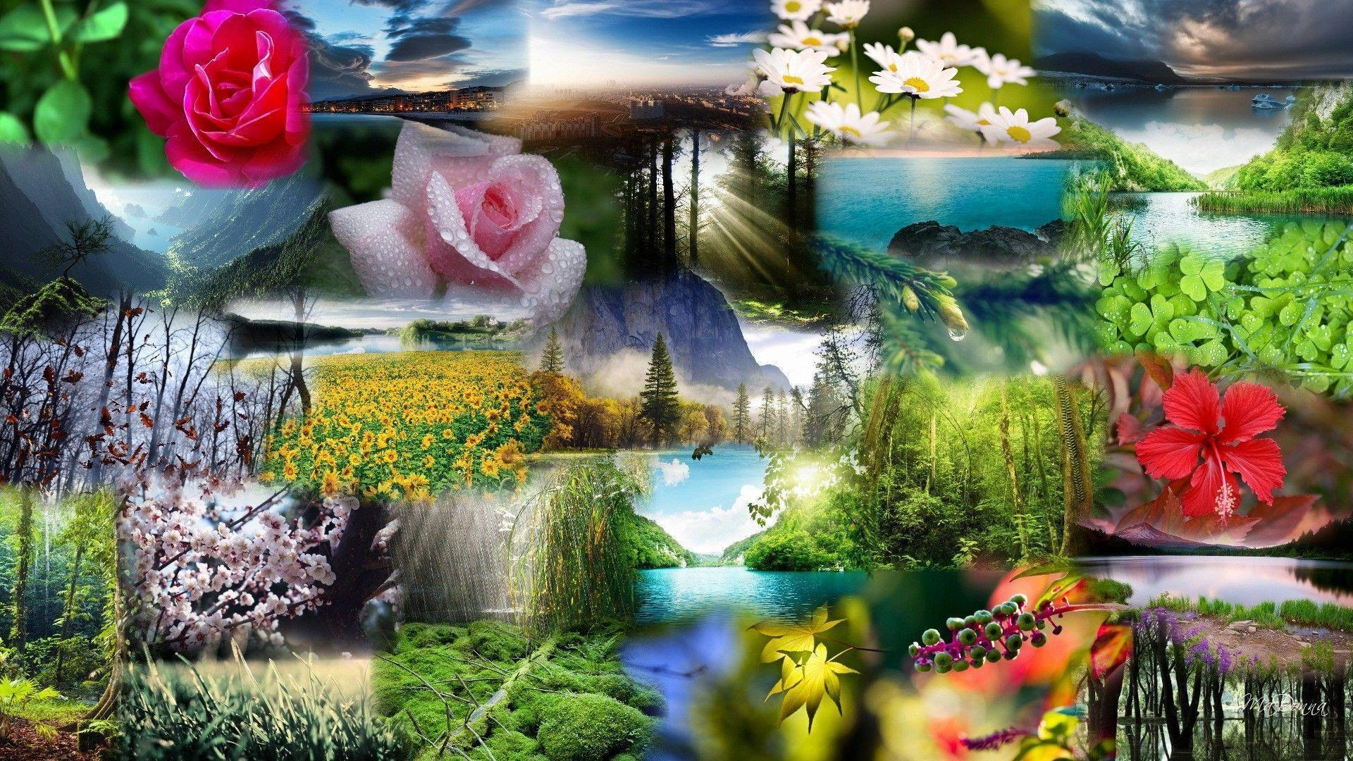 Wallpapers For Natural Beauty Wallpaper Collection
