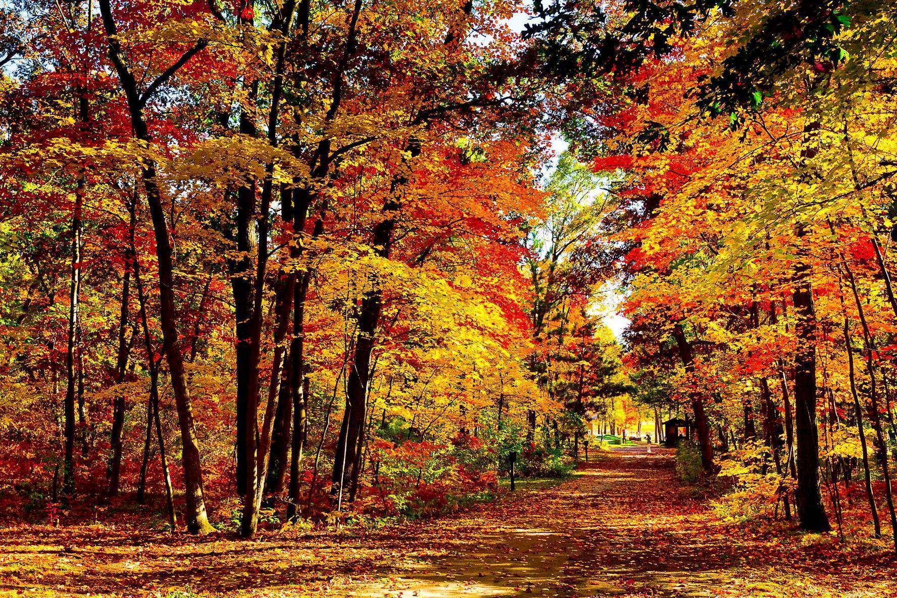 Beautiful Fall Pictures Wallpapers - Wallpaper Cave