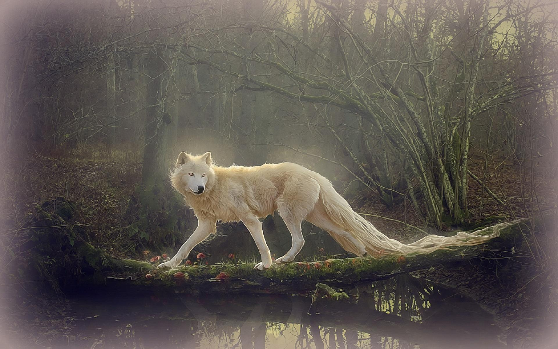 wallpaper loup fond - photo #34