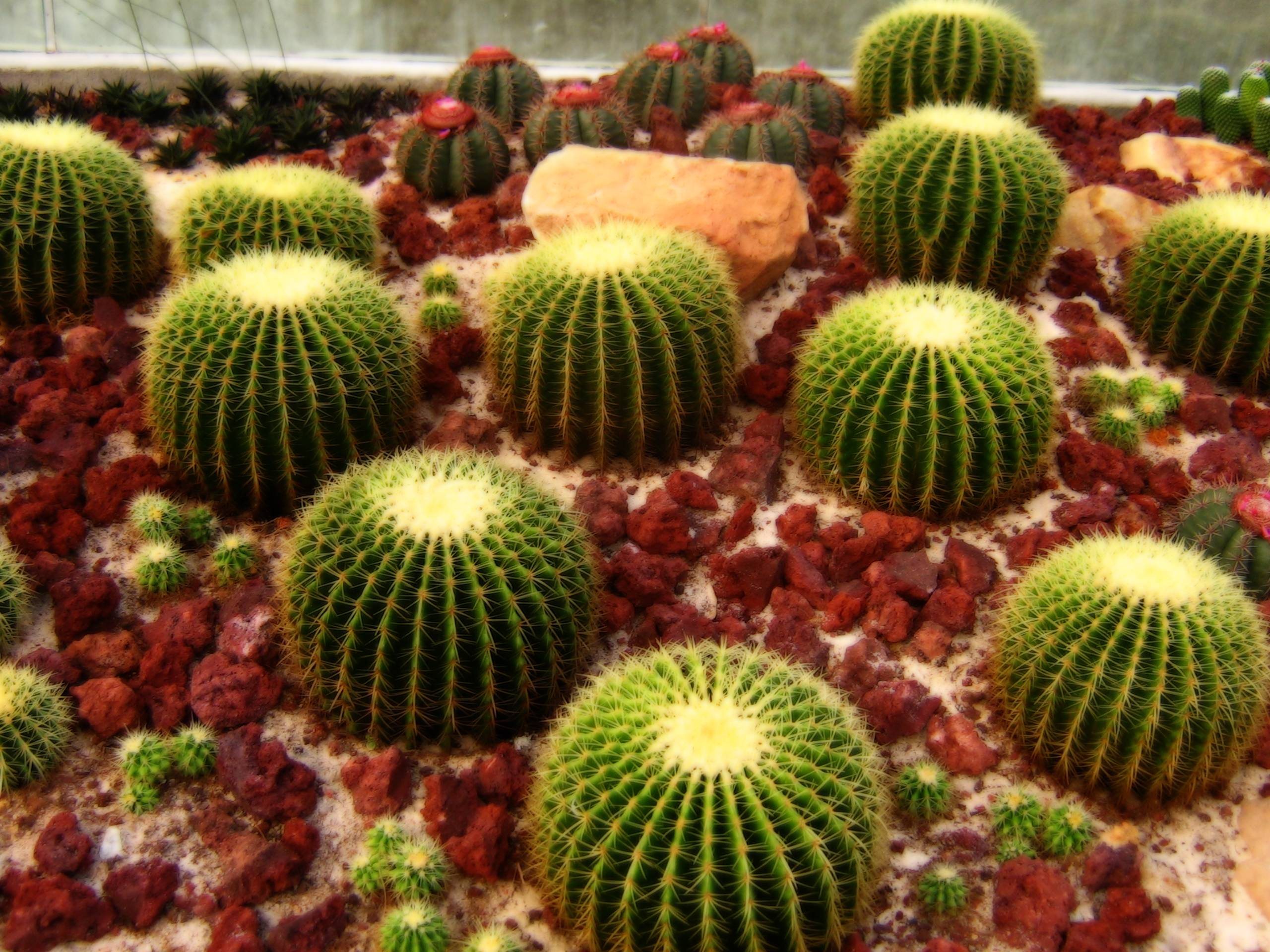 hd cactus wallpapers - photo #5