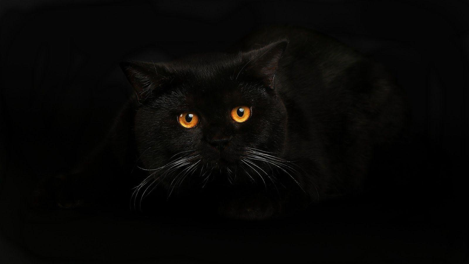 Wallpapers black cat wallpaper cave - Kitten backgrounds ...