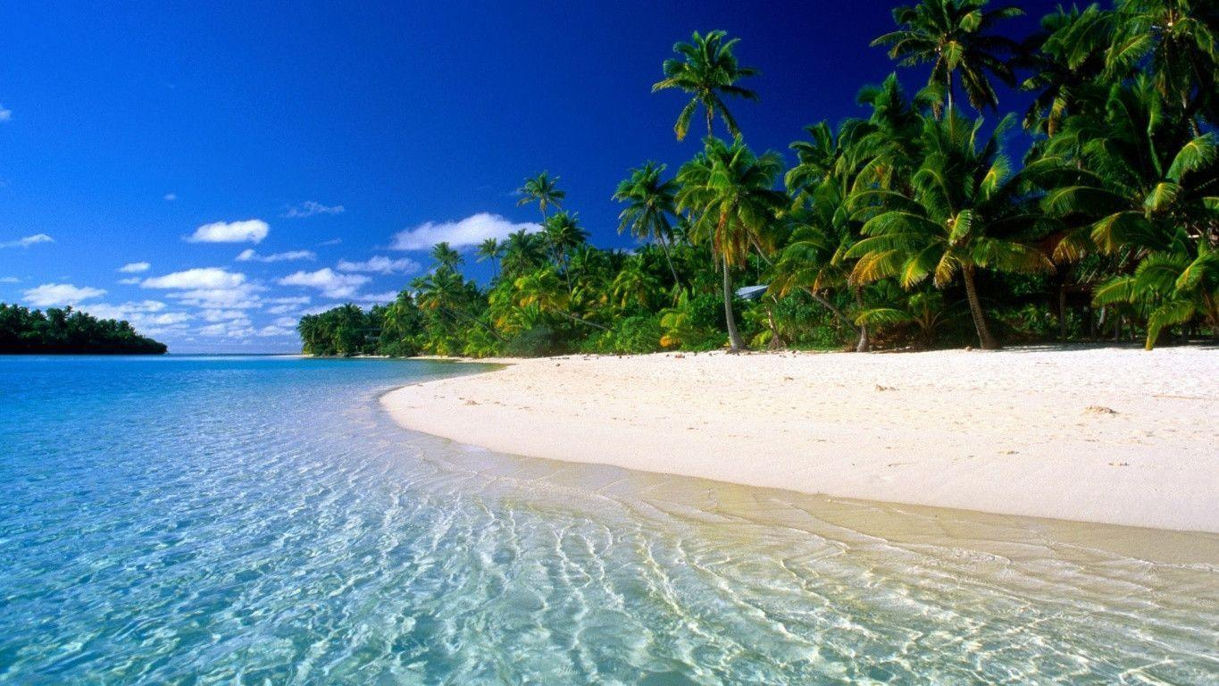 Exotic Palm Beach Widescreen Wallpaper