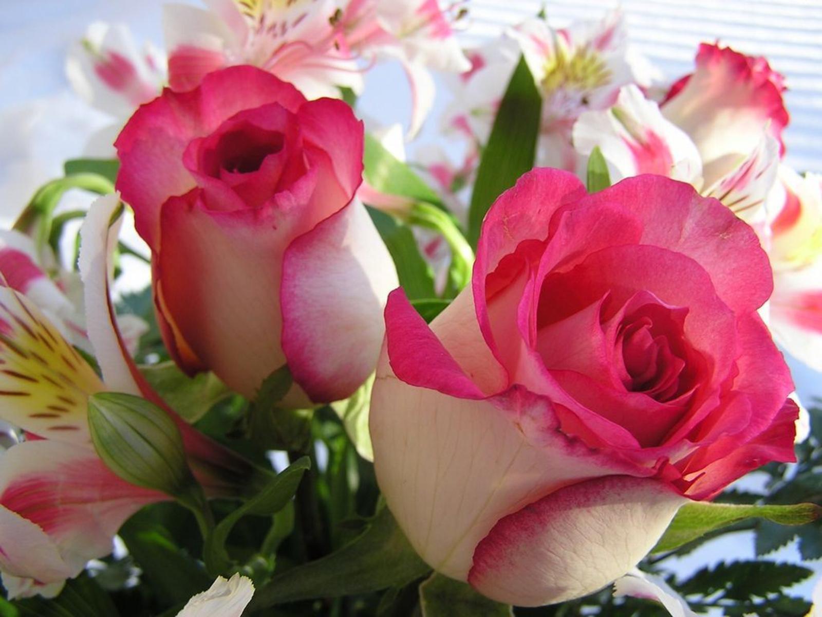 Beautiful Roses Wallpapers For Desktop Hd Background Wallpaper 23 ...