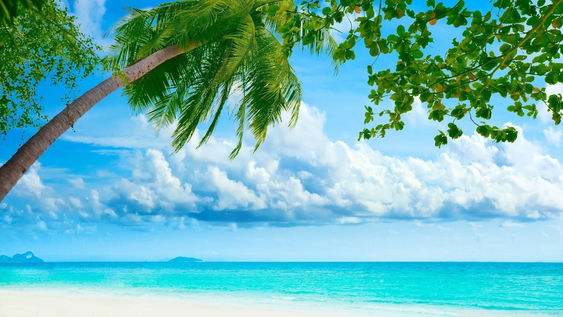 tropical beach wallpaper 120 - photo #20