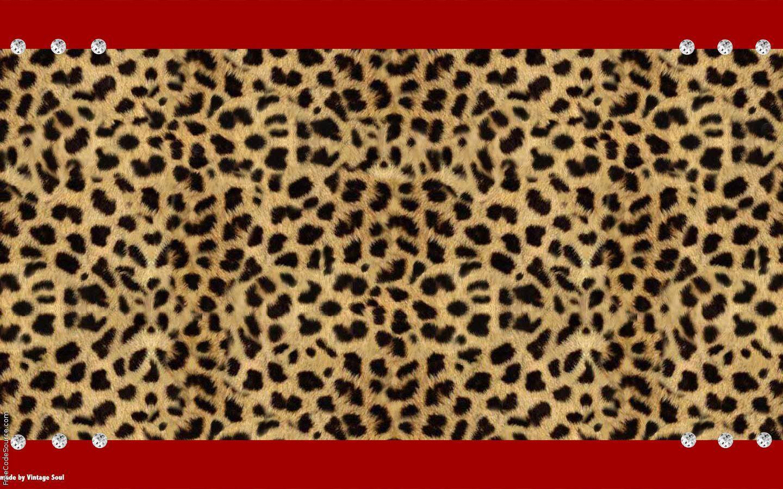 Cute Cheetah Wallpapers - Wallpaper Cave