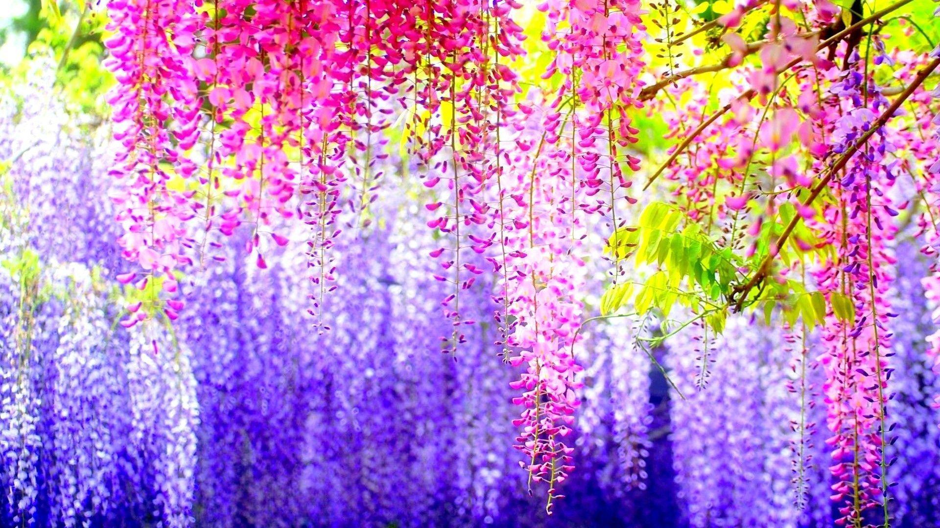 Pretty Flowers Backgrounds - Wallpaper Cave