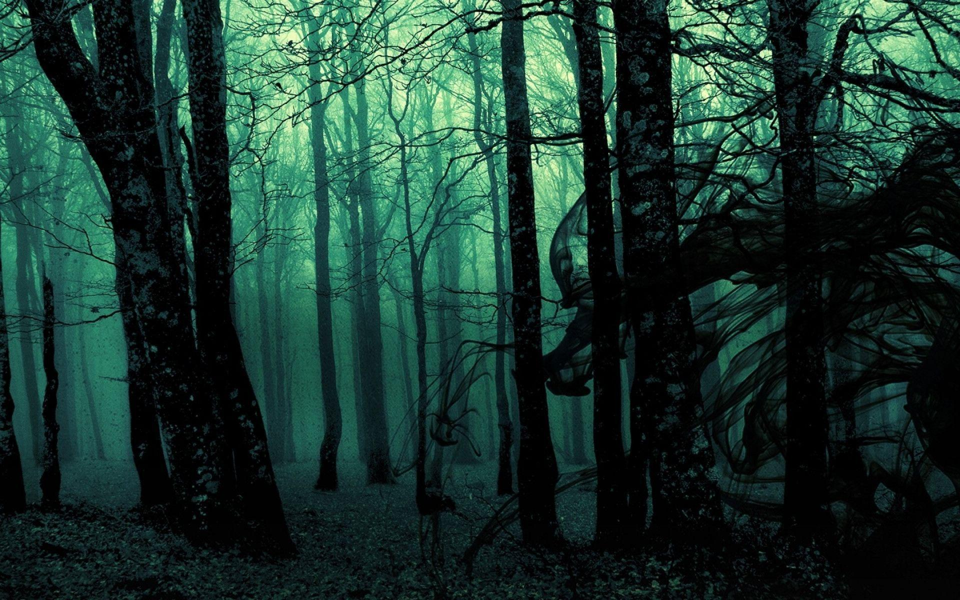 dark places forest trees - photo #3