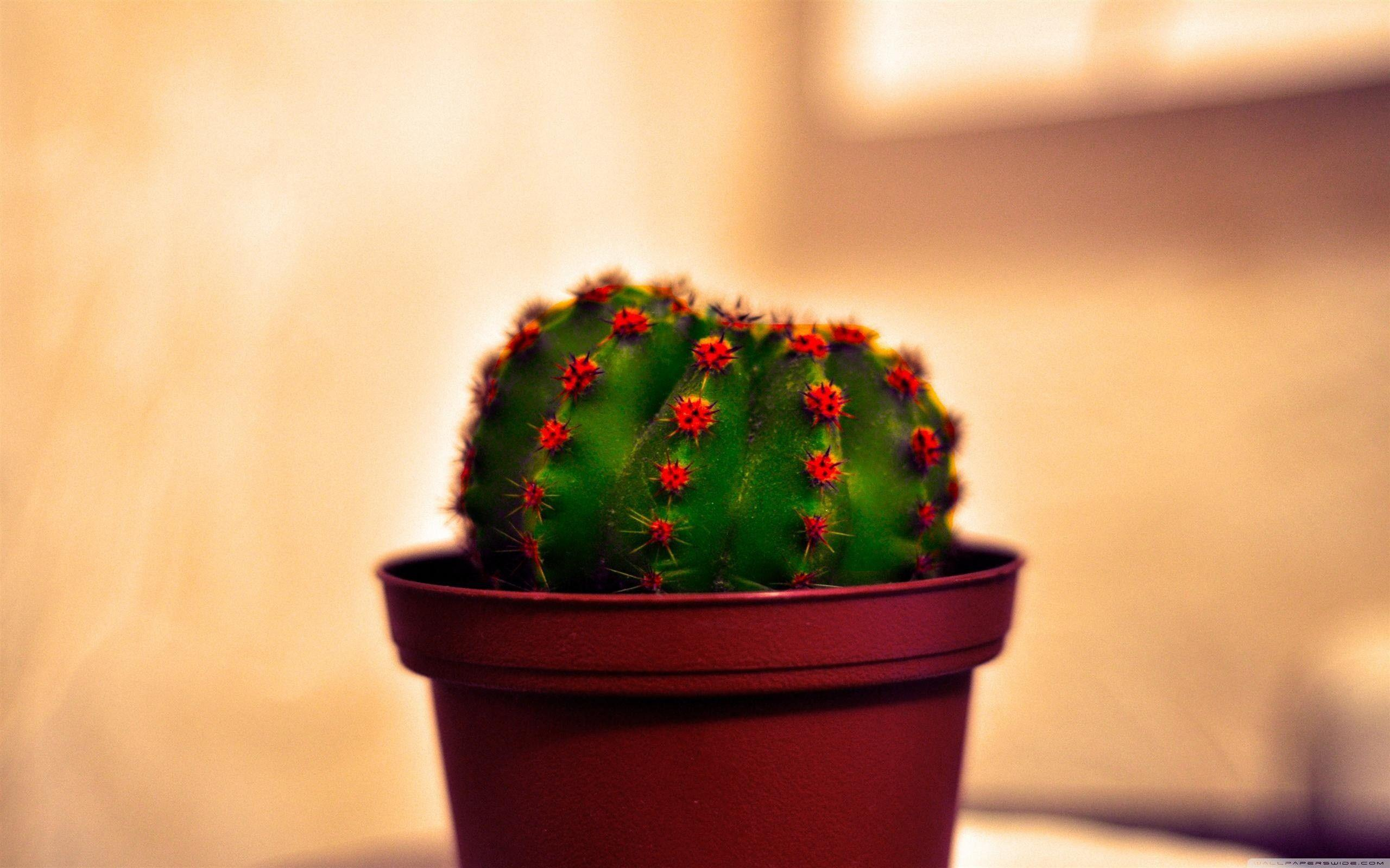 hd cactus wallpapers - photo #36