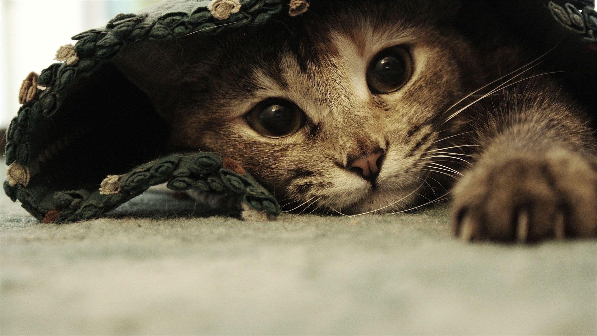 Funny Cat Desktop Wallpapers , Wallpaper Cave