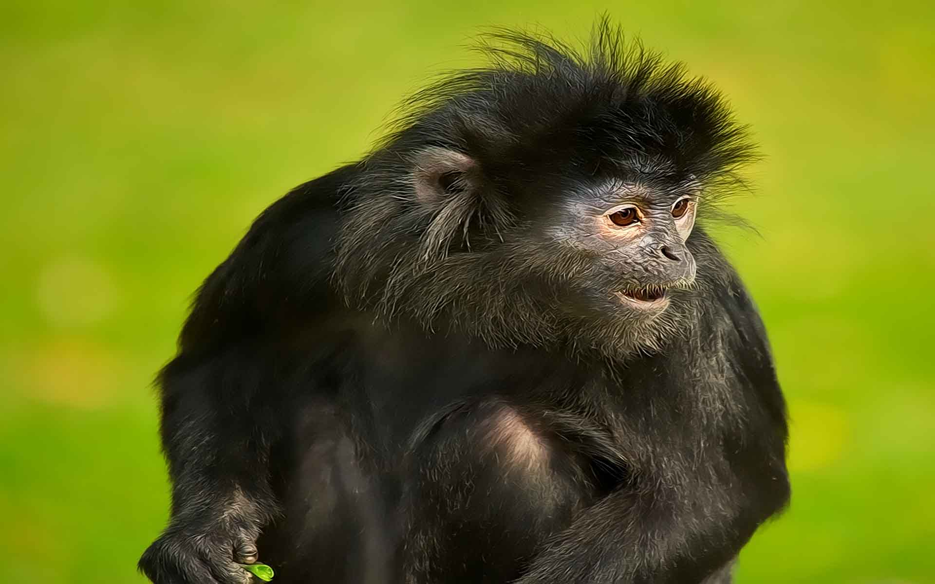 Monkey Wallpapers HD Pictures One HD Wallpaper Pictures