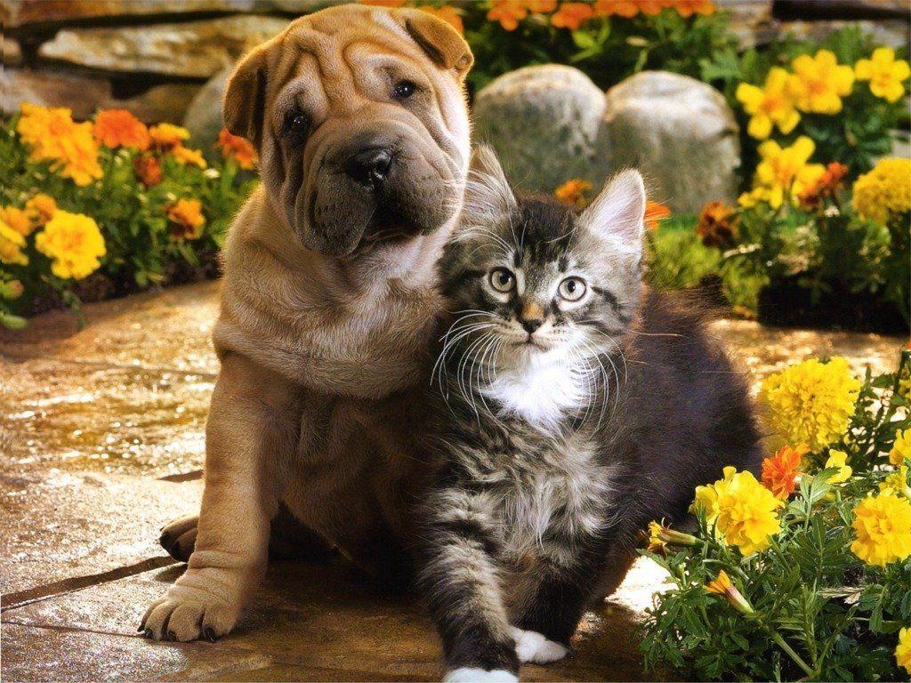 <b>Dog</b> And <b>Cat Wallpaper</b> - WallpaperSafari