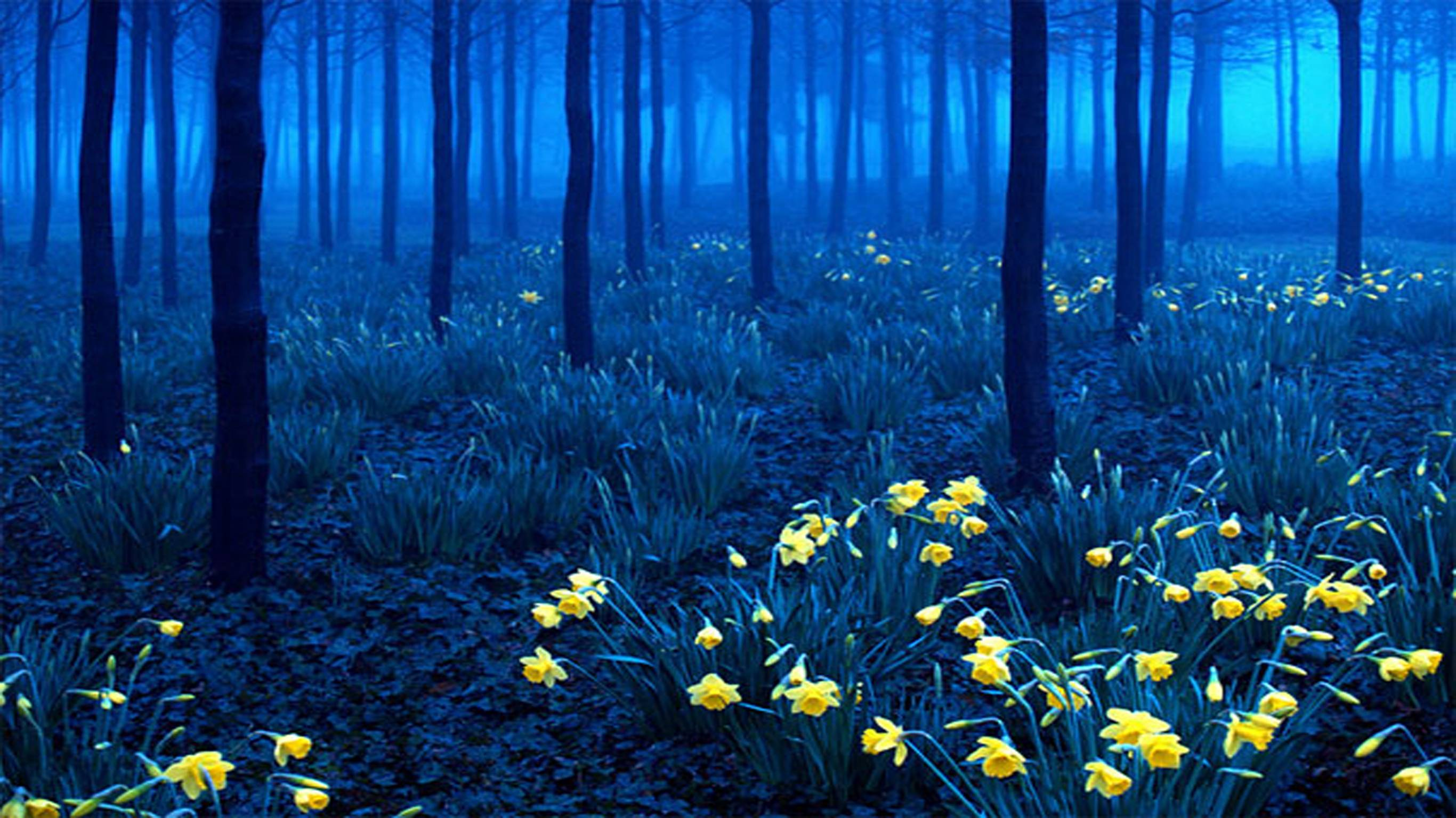 black forest wallpapers Wallpapers HD Image 11860