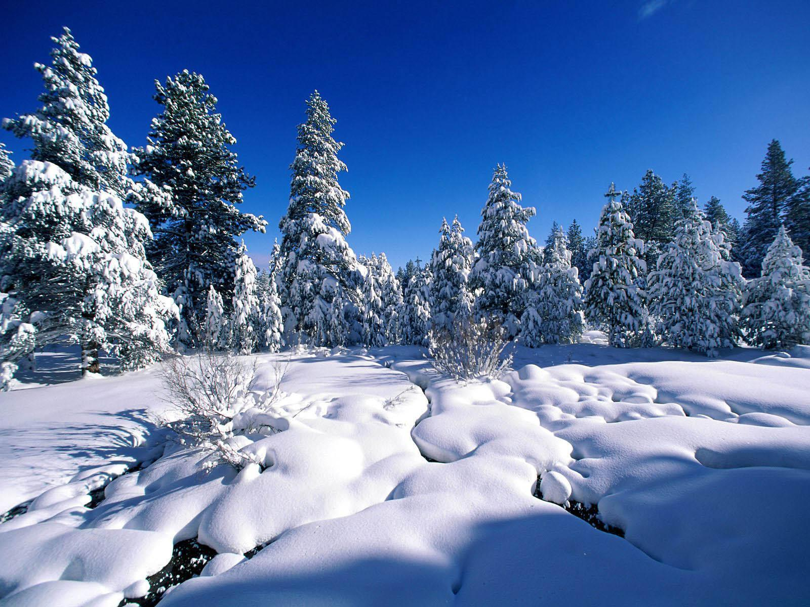 Beautiful Snow Backgrounds Image & Pictures
