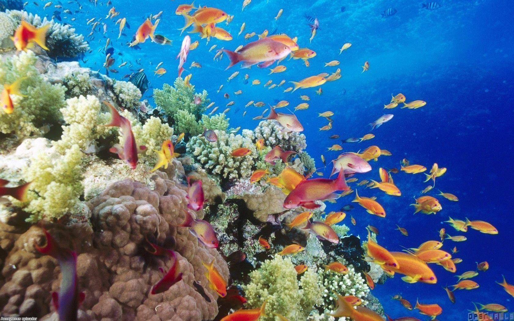 Wallpapers For > Tropical Fish Wallpapers