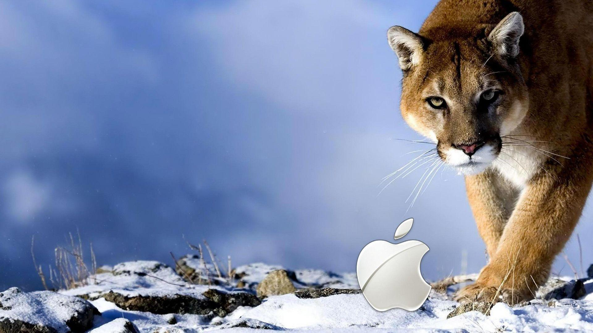 Tiger Apple HD Wallpapers 1080p