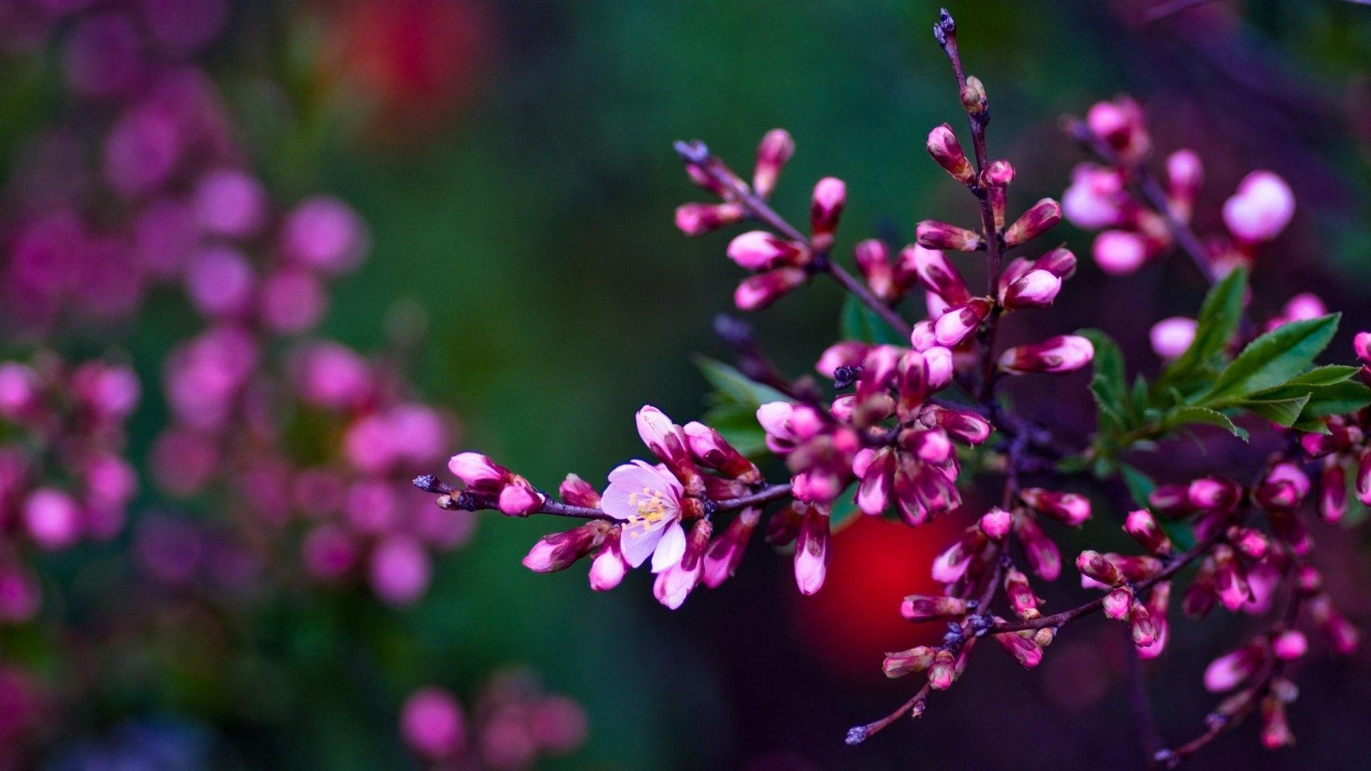 Hd wallpaper spring - Purple Spring Flower Hd Wallpaper Amazon Walls