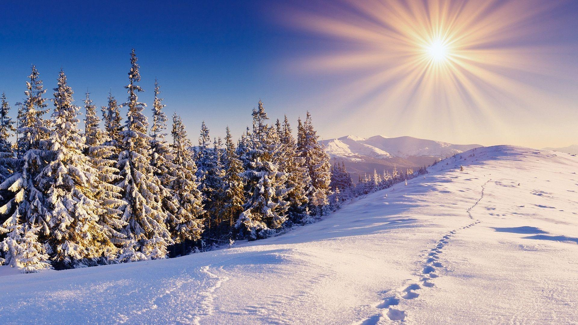 Download Cold Rays Winter Sun Nature Iphone Ipad Wallpaper ...