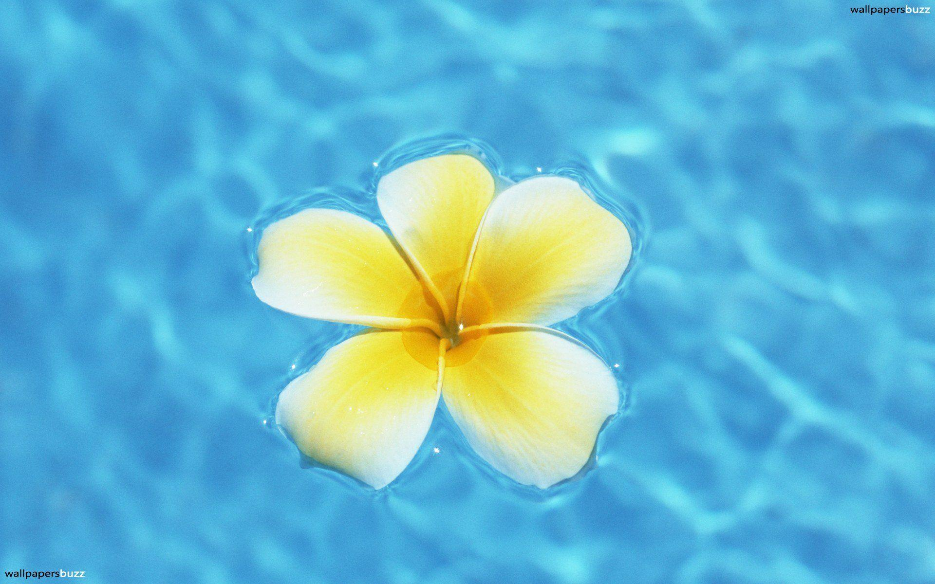 Hawaiian Flowers Wallpapers - Wallpaper Cave