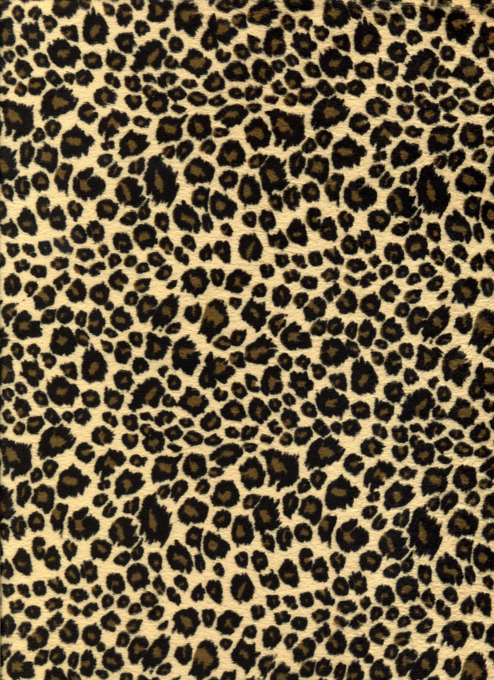 Leopard Print Bedroom Wallpaper Leopard Backgrounds Wallpaper Cave