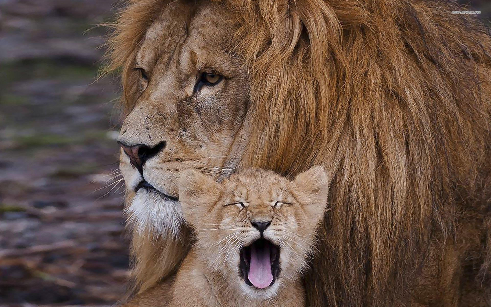 lion and cub relationship help