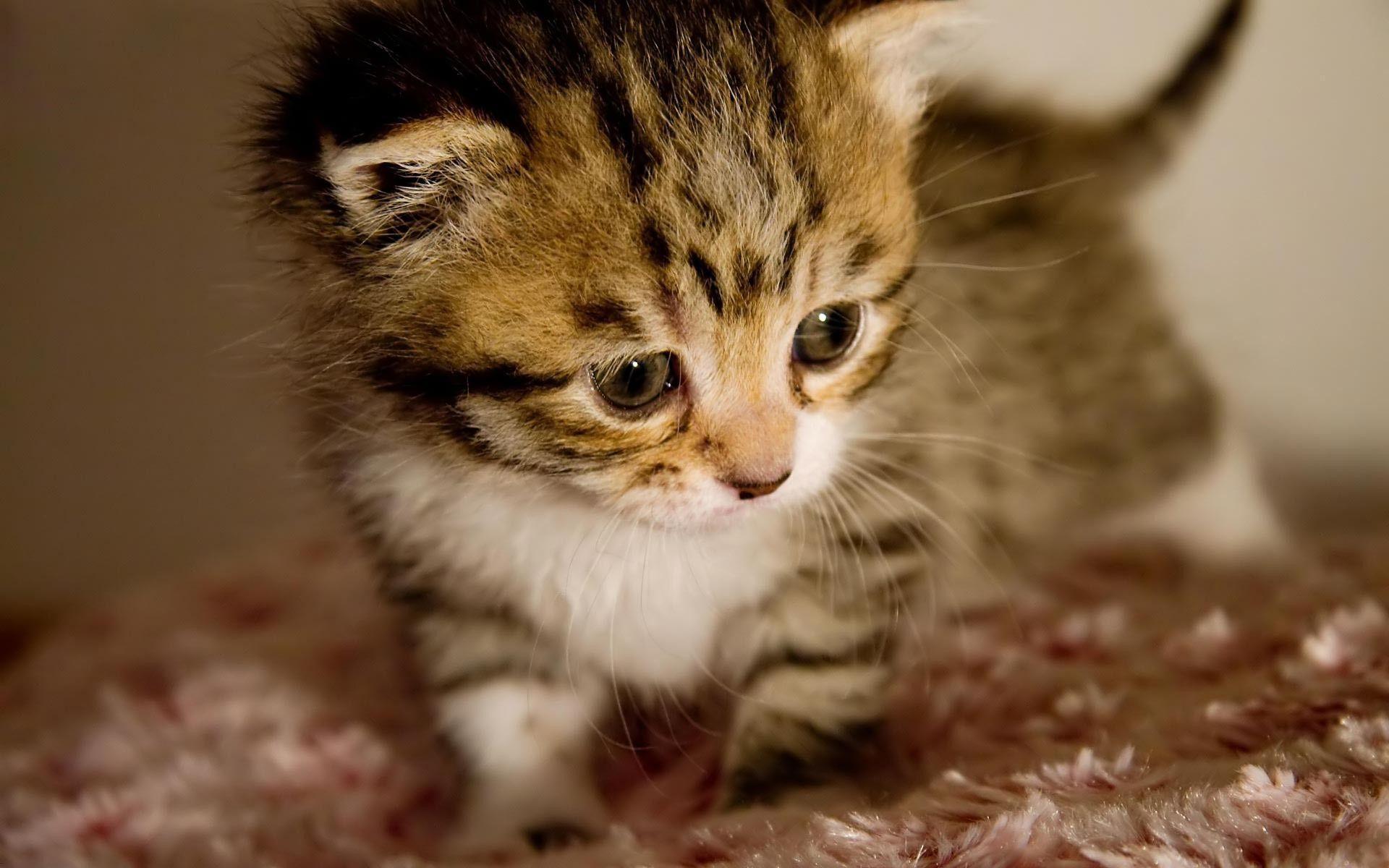 Baby Kitten Wallpapers - Wallpaper Cave