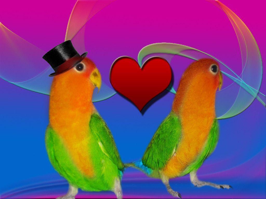 love bird wallpapers wallpaper cave