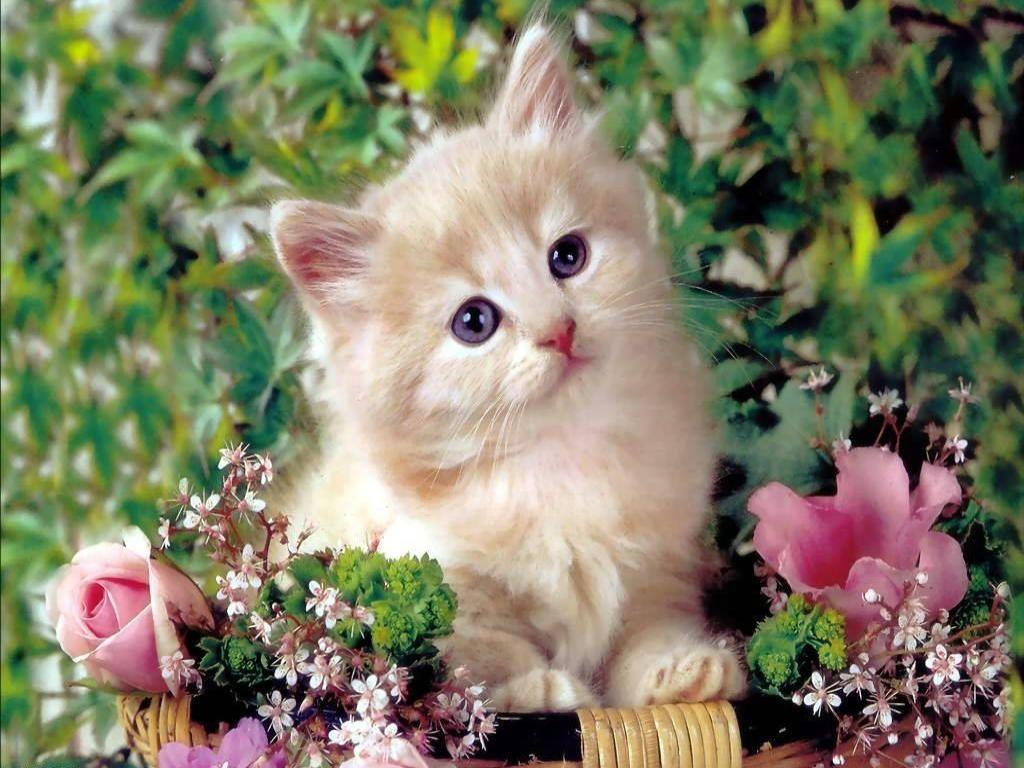 Cute Kitty Wallpapers Wallpaper Cave