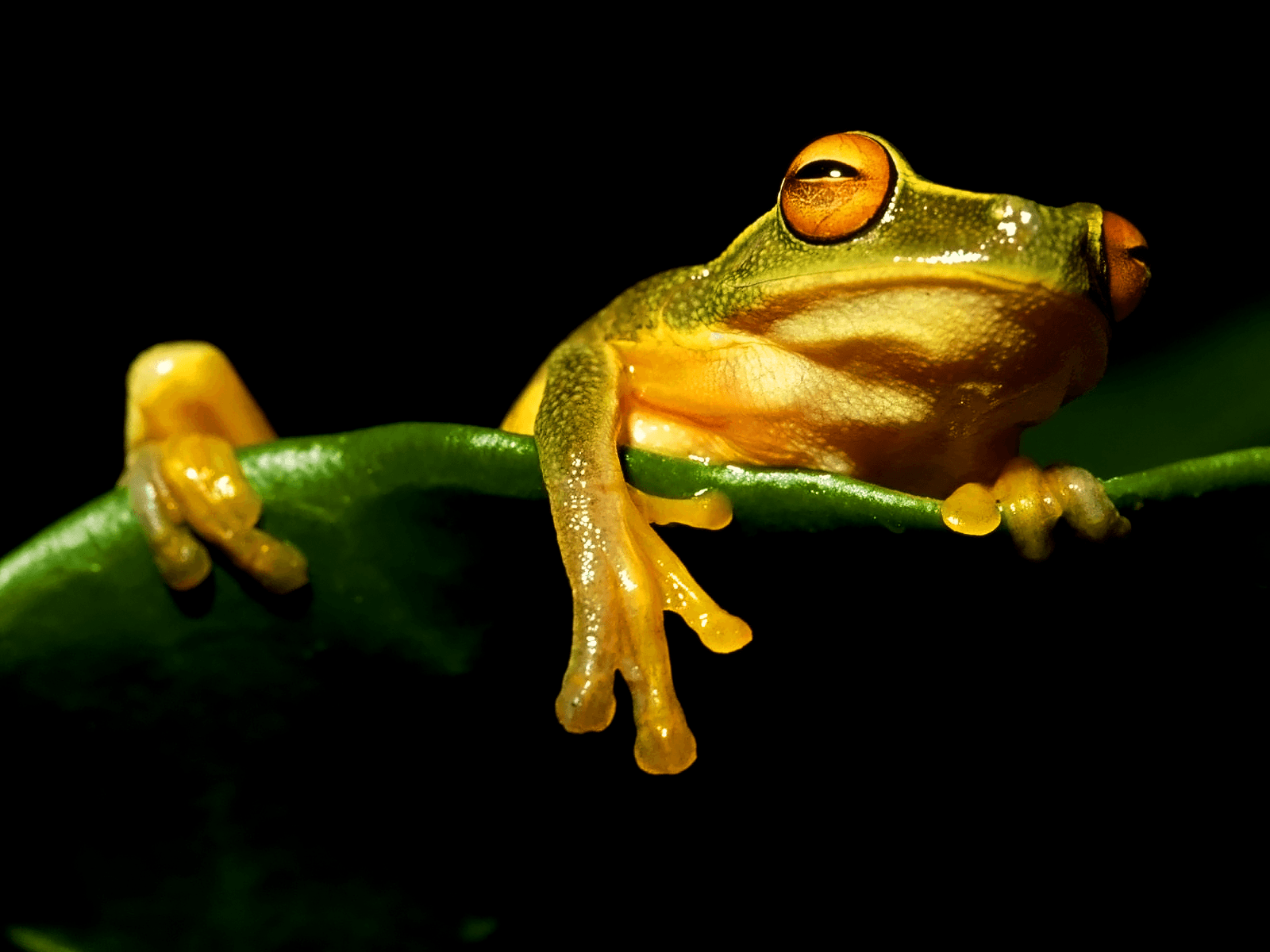 Frog backgrounds wallpaper cave - Frog cartoon wallpaper ...