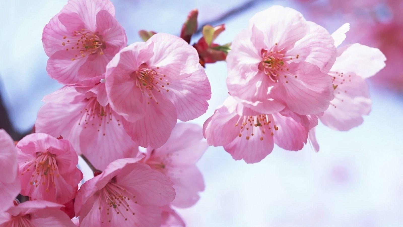 Spring Flowers Backgrounds Desktop - Wallpaper Cave
