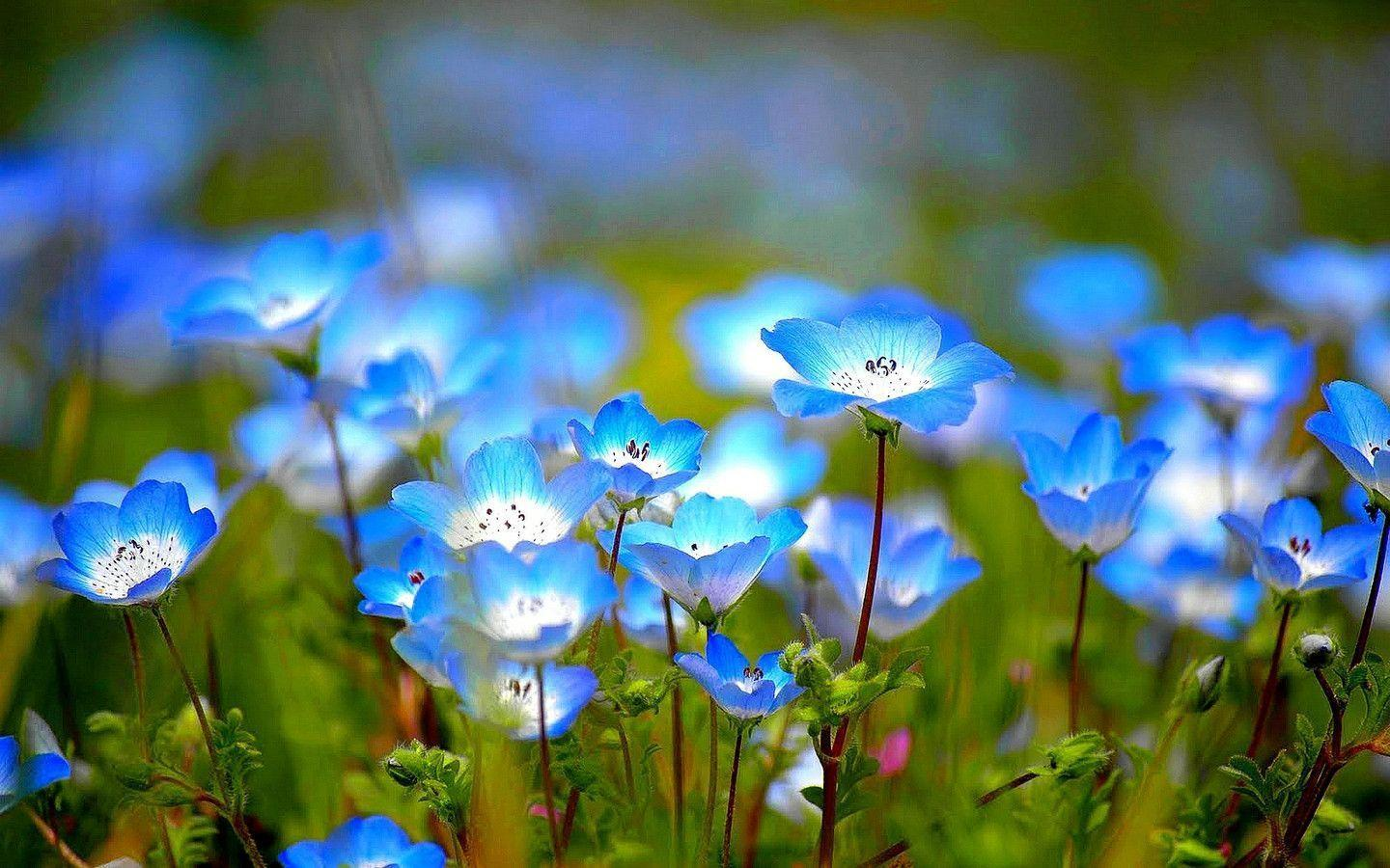 wild flower wallpapers wallpaper cave