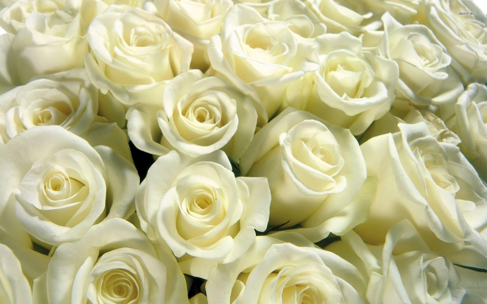 White rose wallpapers wallpaper cave bouquet of white roses wallpaper flower wallpapers mightylinksfo
