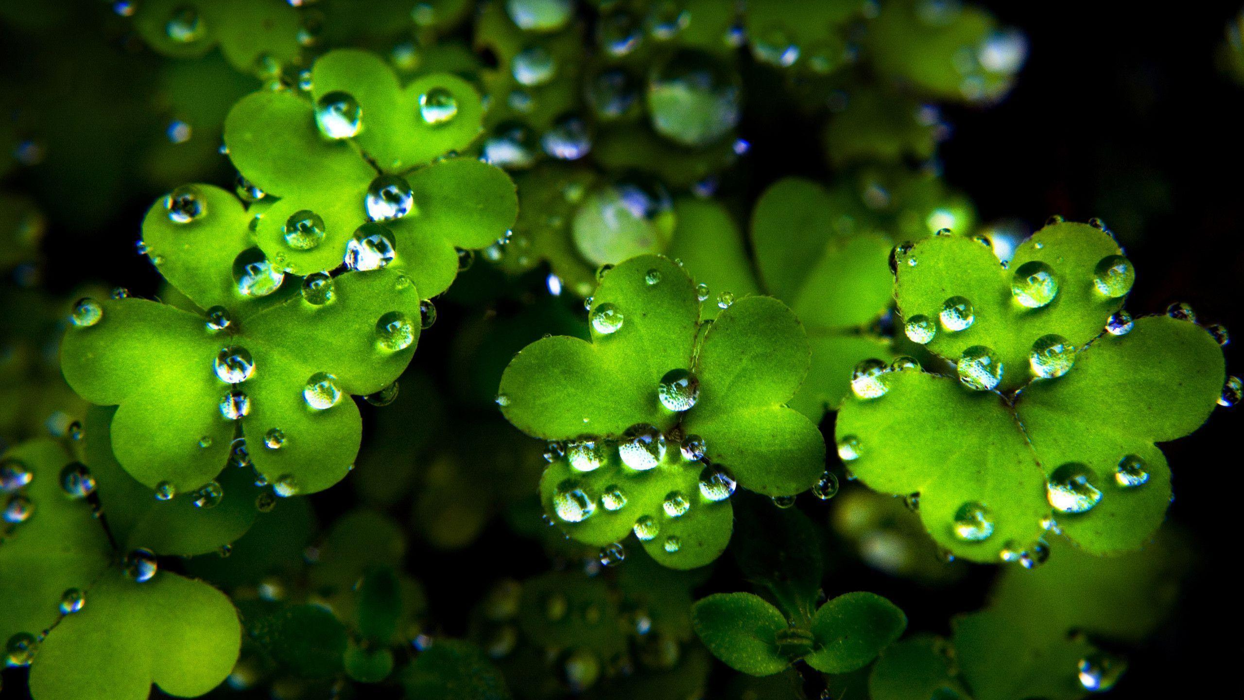 patricks day shamrock background - photo #18
