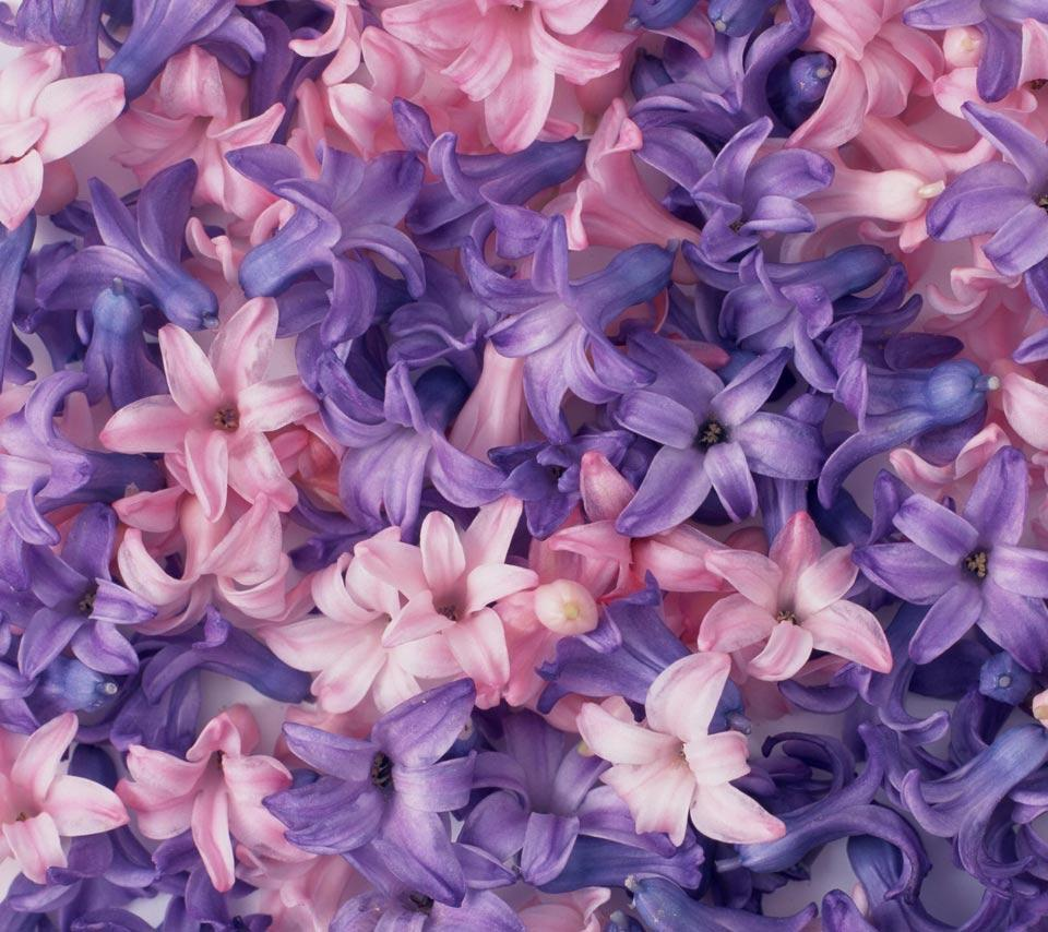 Pink And Purple Flower Backgrounds Wallpaper Cave
