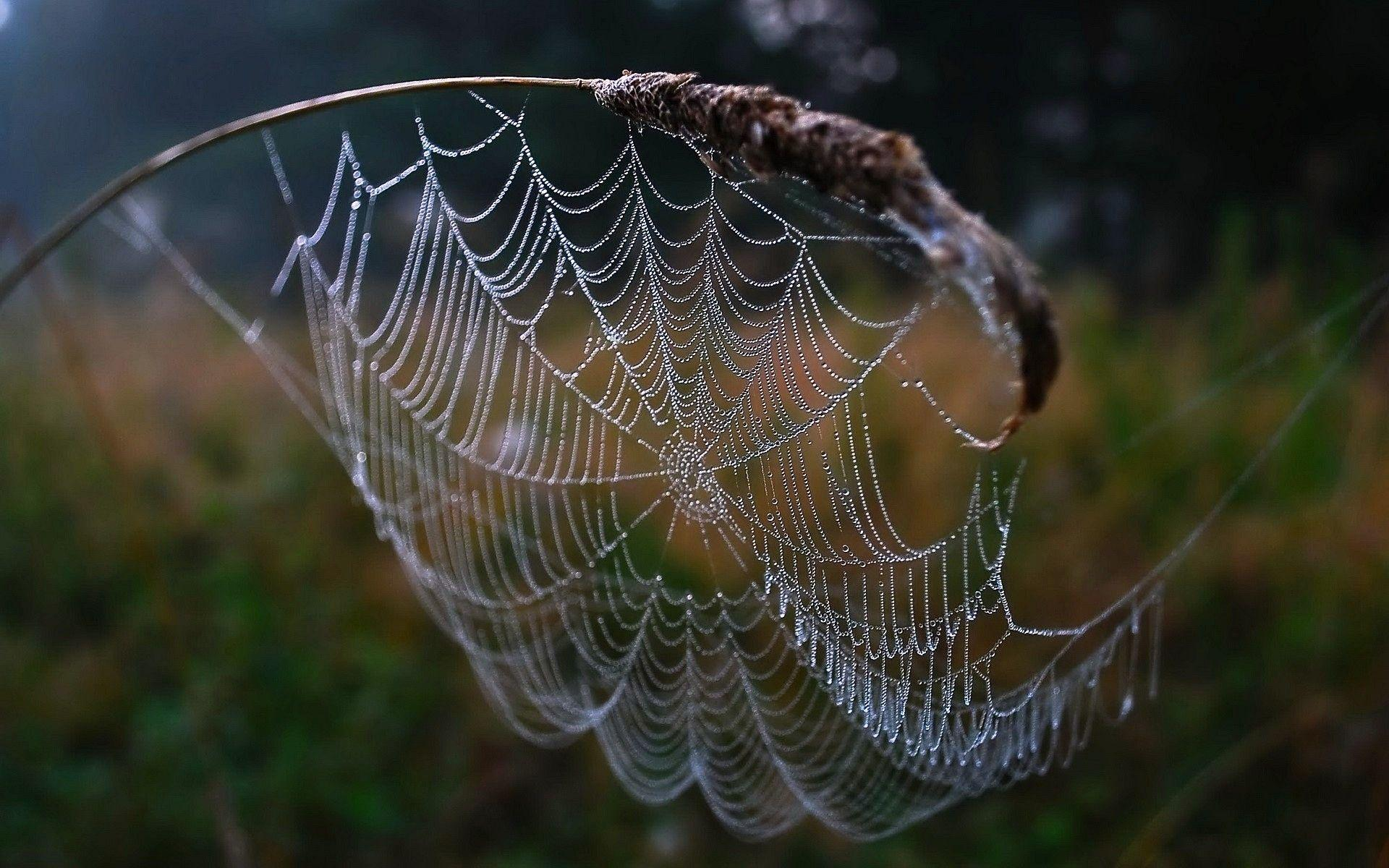 Spider Web Wallpapers Hd