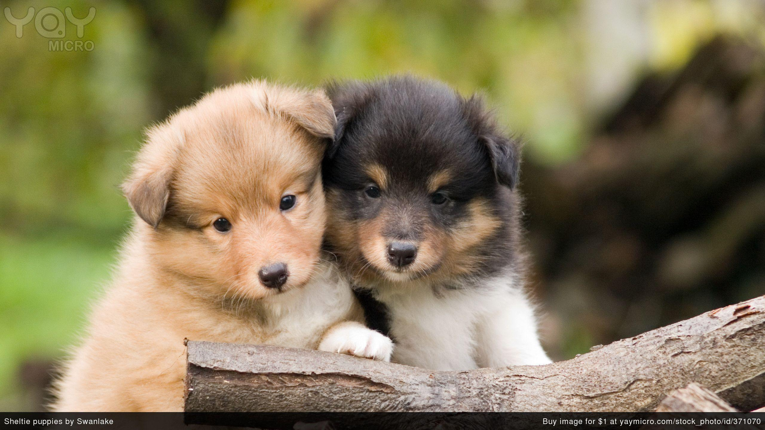 Cute Puppy Wallpapers Cute Puppy PC Backgrounds DY