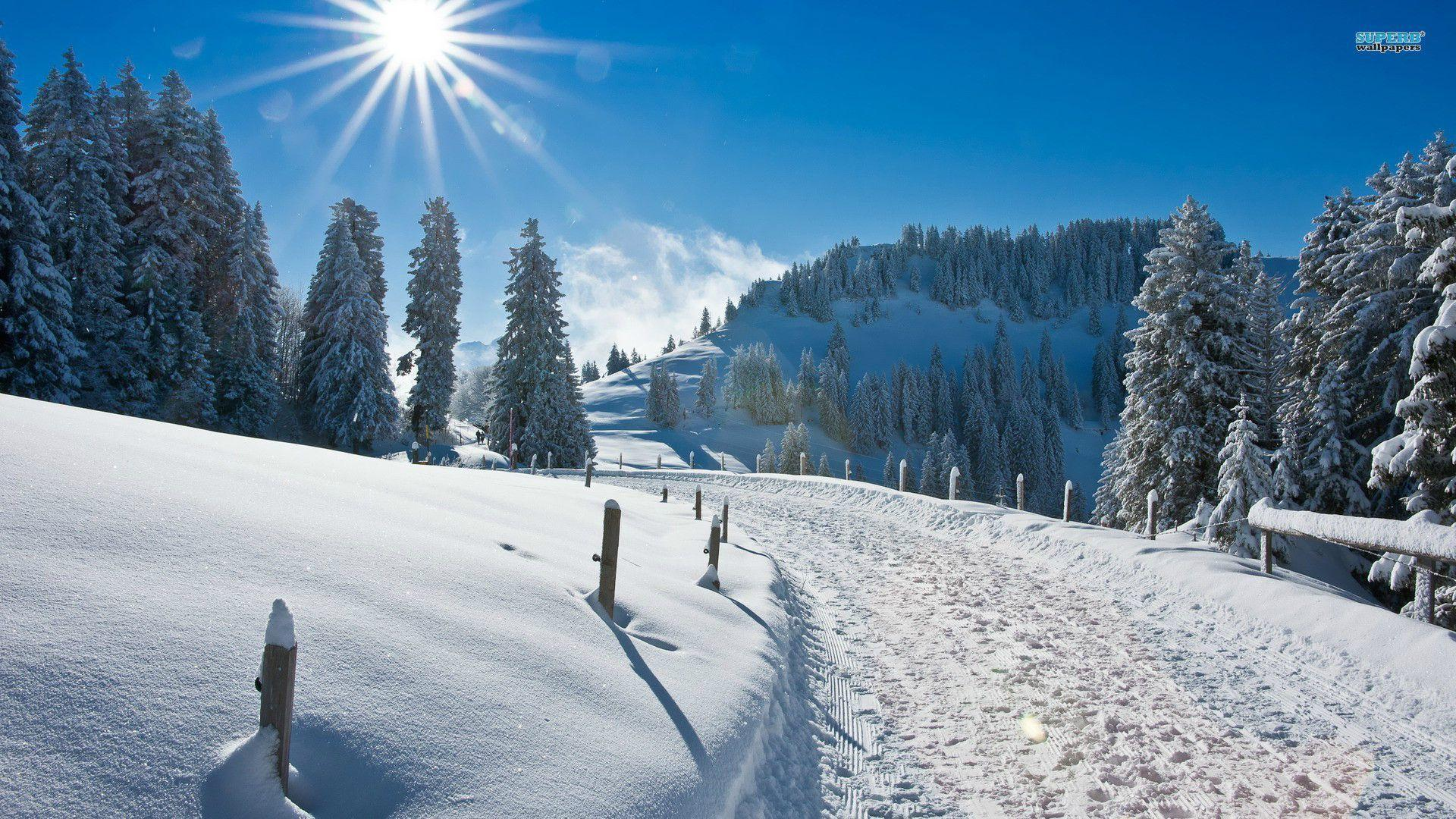 Sunny winter wallpaper - Nature wallpapers - #