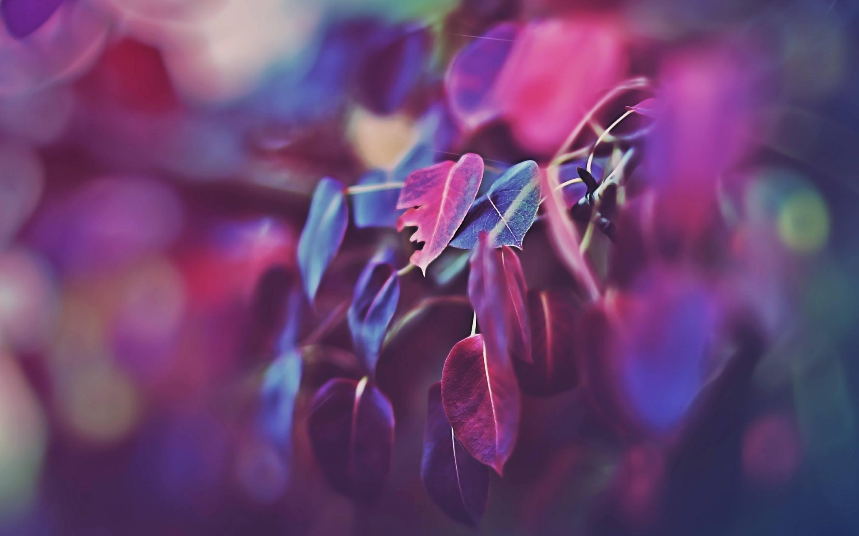 macbook retina wallpapers chainsmokers - photo #36