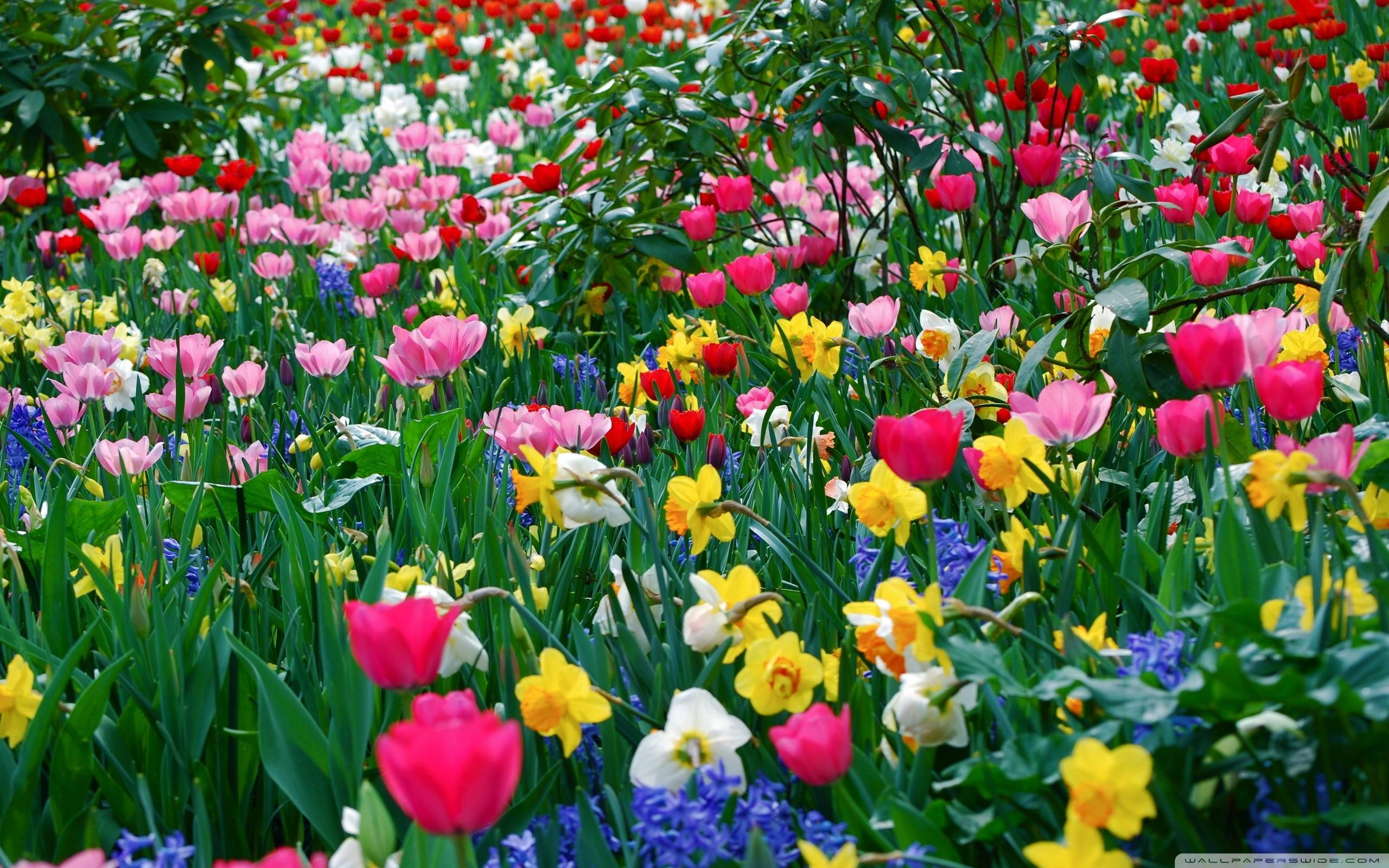 Spring Flowers Background Wallpaper Free Sitewallorg