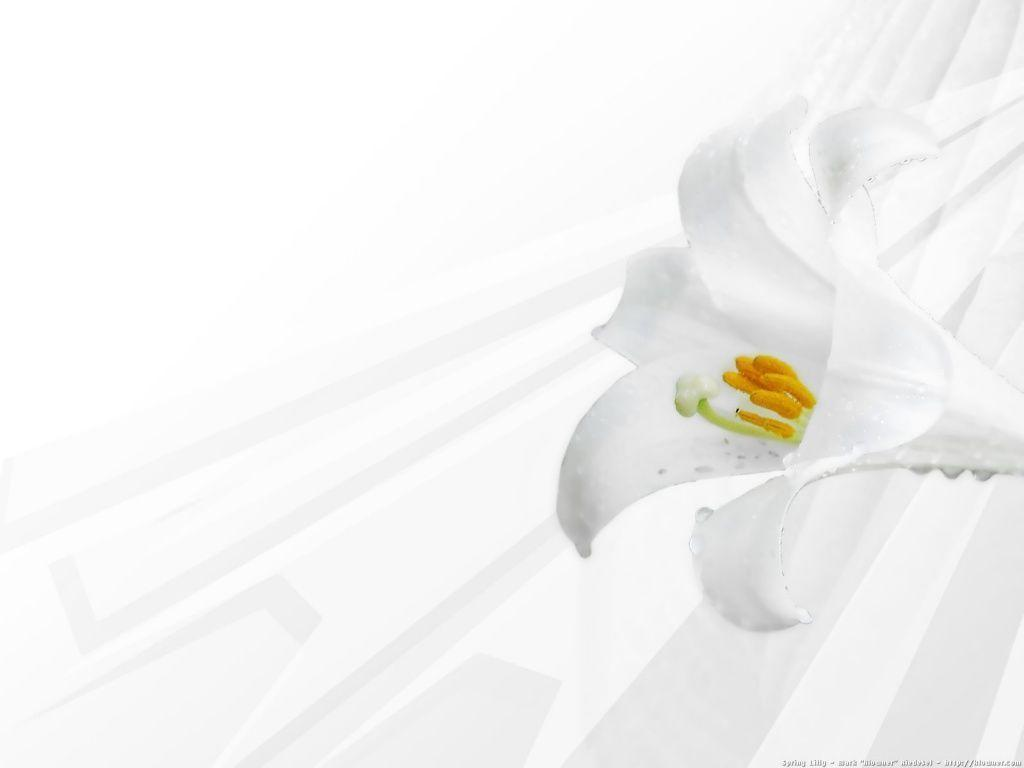 White Flower Wallpapers Wallpaper Cave