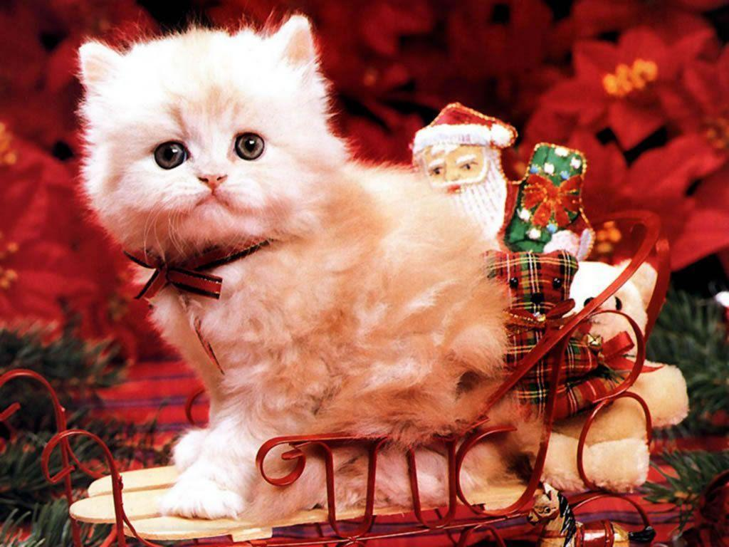 Christmas Kitten - Christmas Wallpaper (2736116) - Fanpop