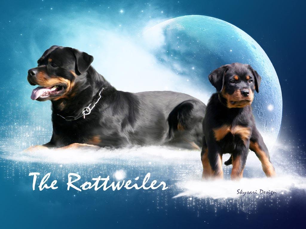 Rottweiler Wallpapers - Wallpaper Cave