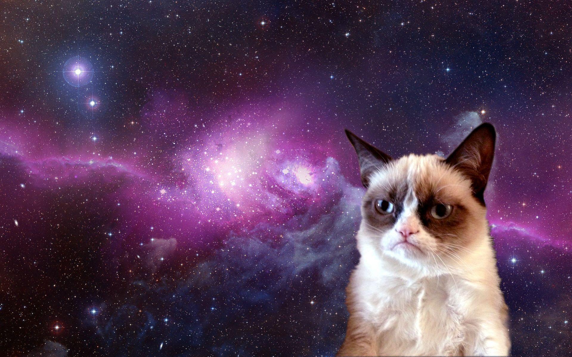 grumpy cat wallpaper nature | vergapipe.