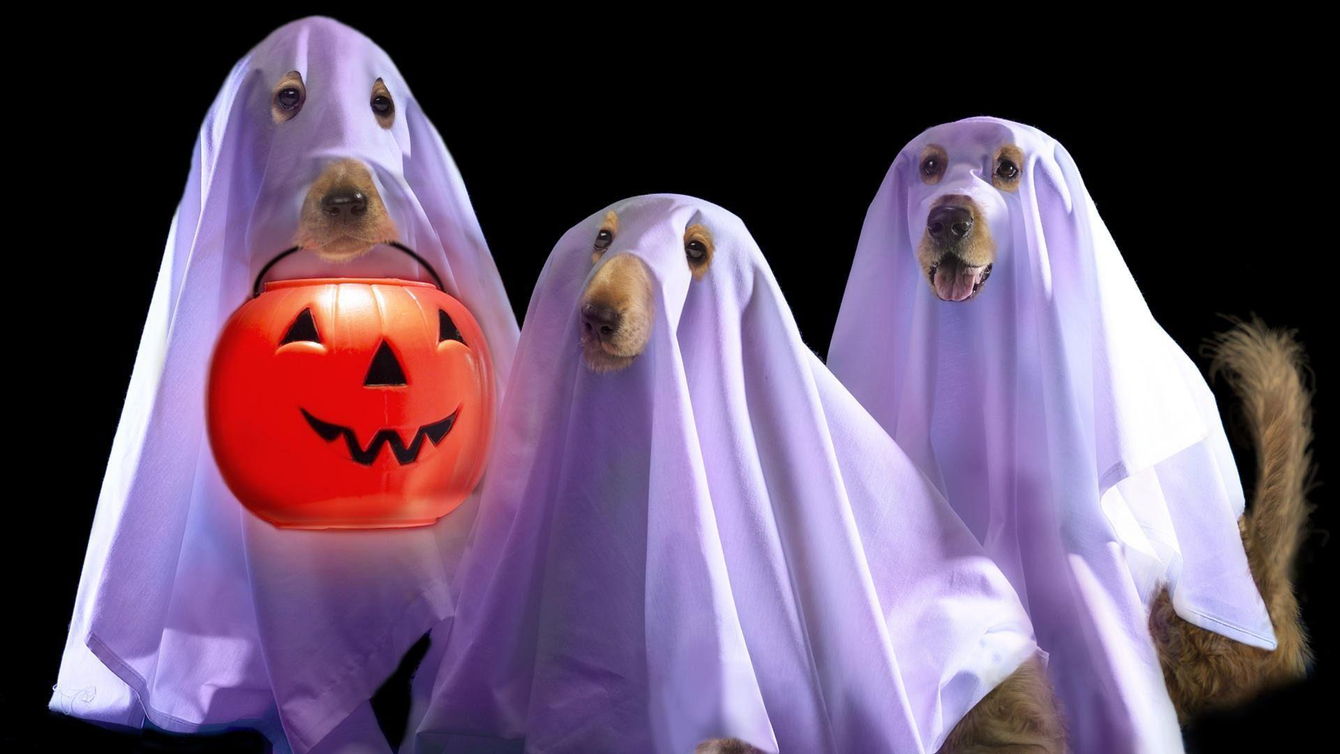 Halloween Screensavers and Wallpaper (58+ images) |Free Funny Screensavers Fall Halloween