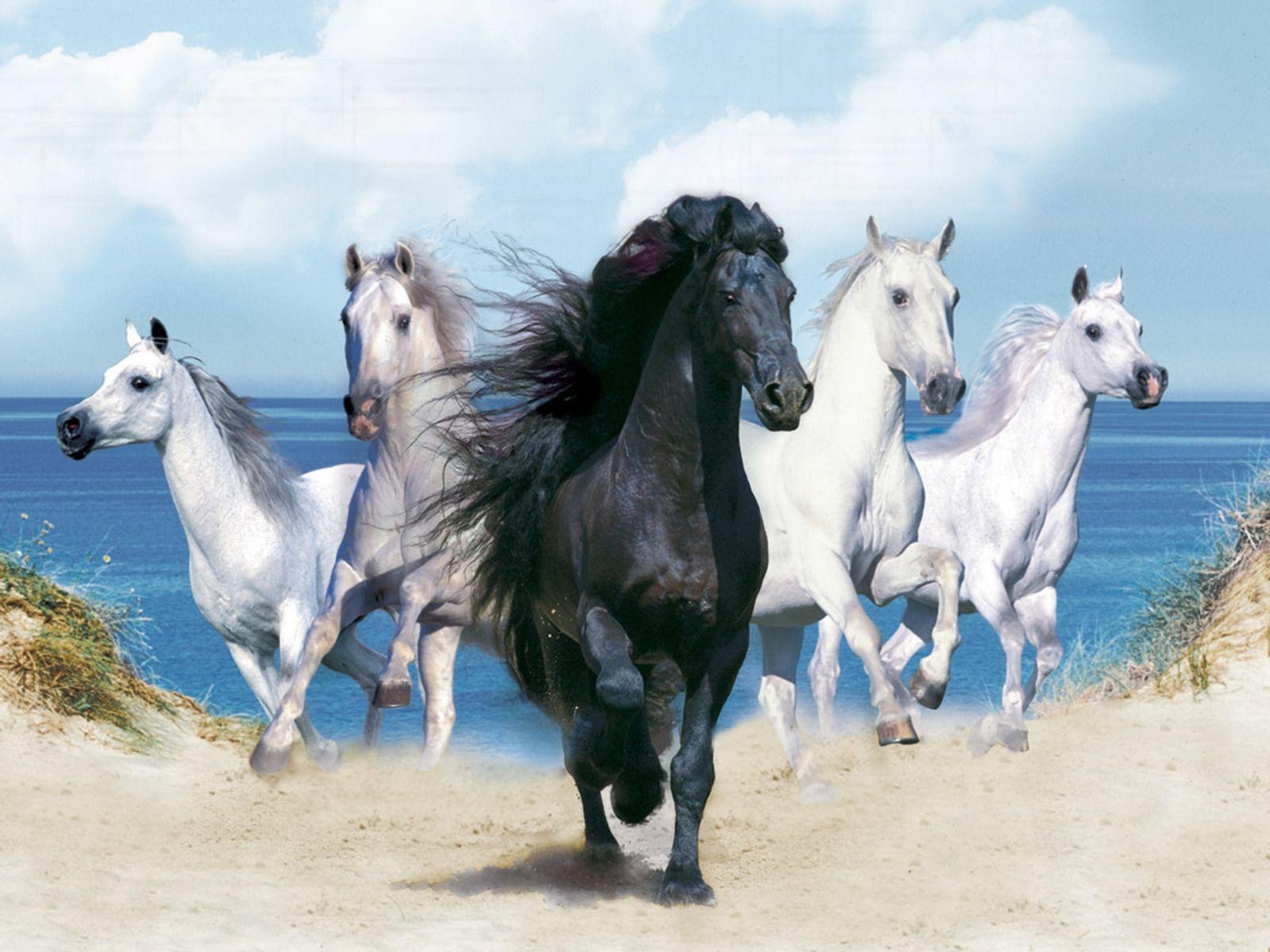 free horse screensavers and - photo #15