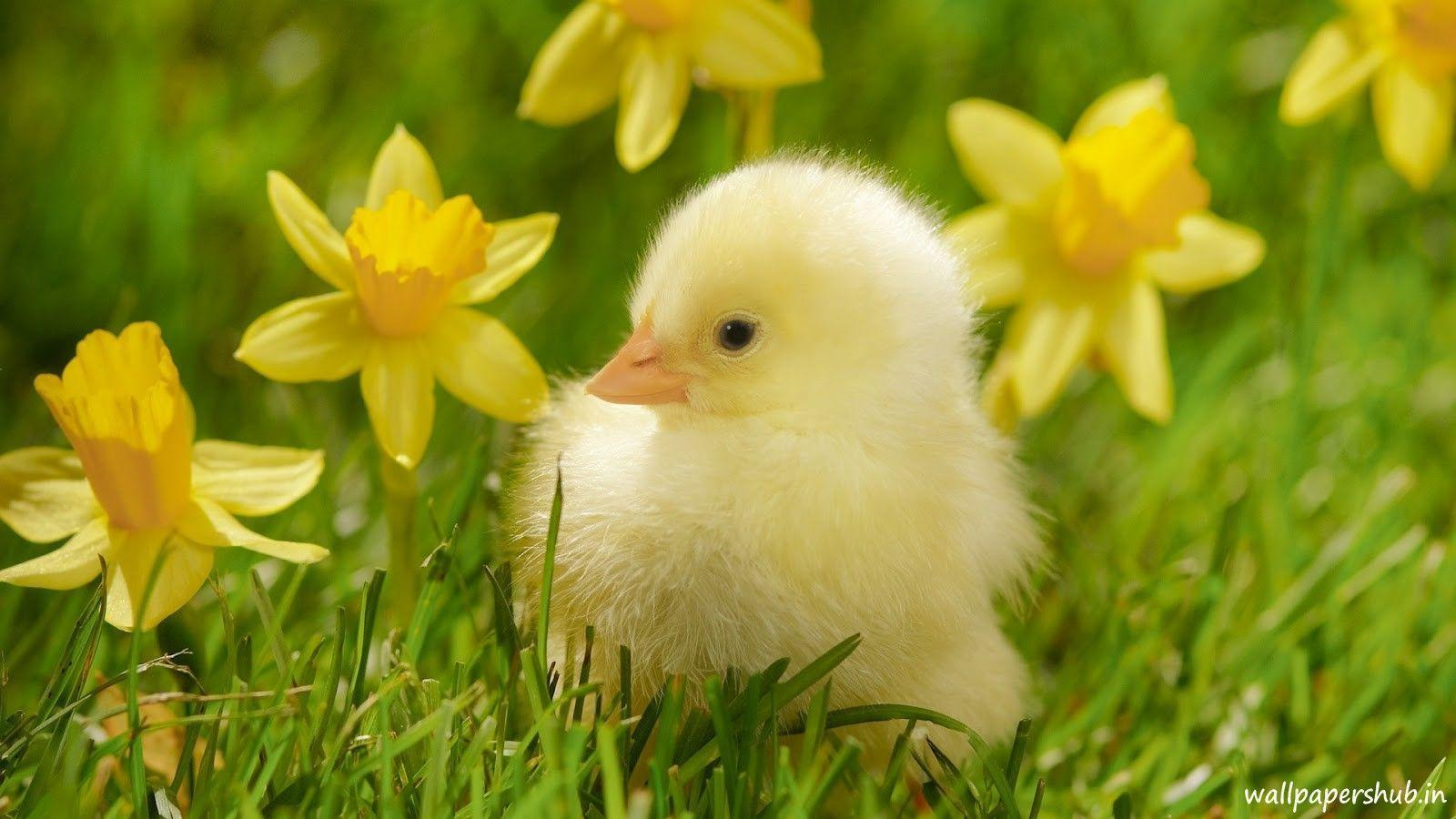 Cute Baby Animal 2015 Wallpapers - Wallpaper Cave